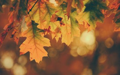 Autumn Special Offer: Conveyancing in Tewkesbury
